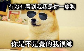 有沒有看到我我是你一隻狗 你是不是覺的我很帥