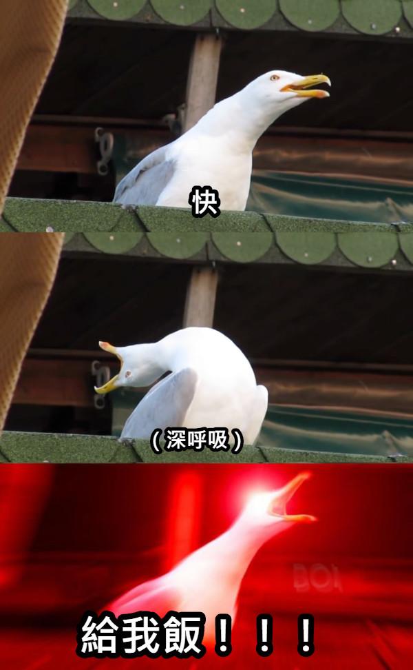 快 (深呼吸) 給我飯!!!