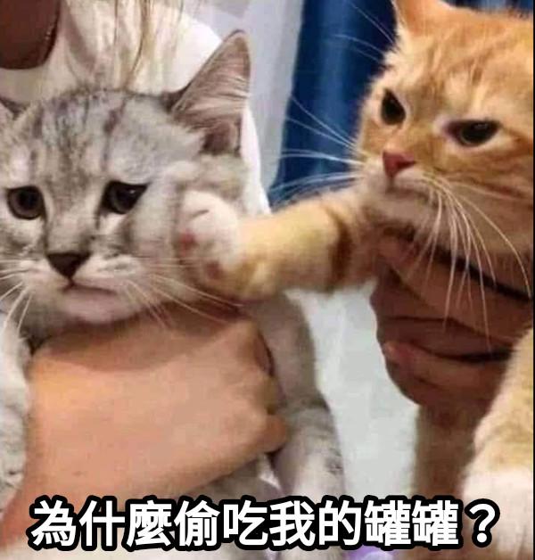 為什麼偷吃我的罐罐?