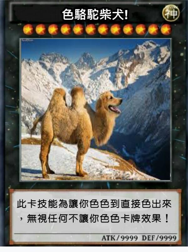 色駱駝柴犬